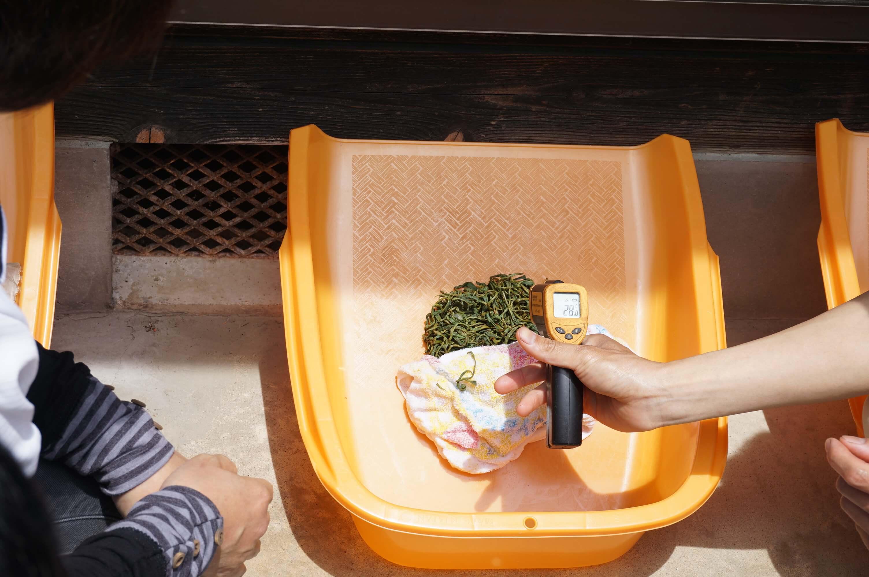 温度を測る 和紅茶づくり